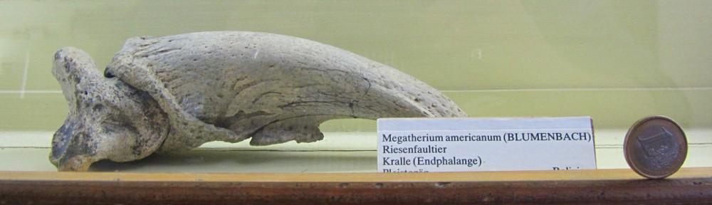 Herr Dr. Hannibal Wägele's biologisch  didaktischer Kramladen